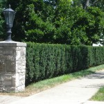 This evergreen taxus hedge provides screening from the street, adding a degree of privacy to the front yard. The use of this plant selection combined with the masonry stone column creates a very architectural feature for the entry drive.