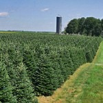 Dutchman-Tree-Farms