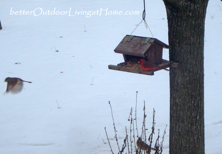 Birdfeeder-and-Birds