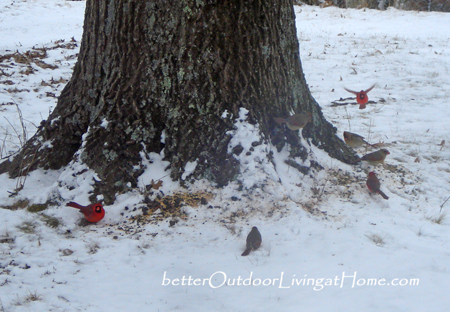 Birds-and-Birdfeed